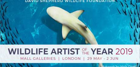 Wildlife Artist Of The Year 2019
